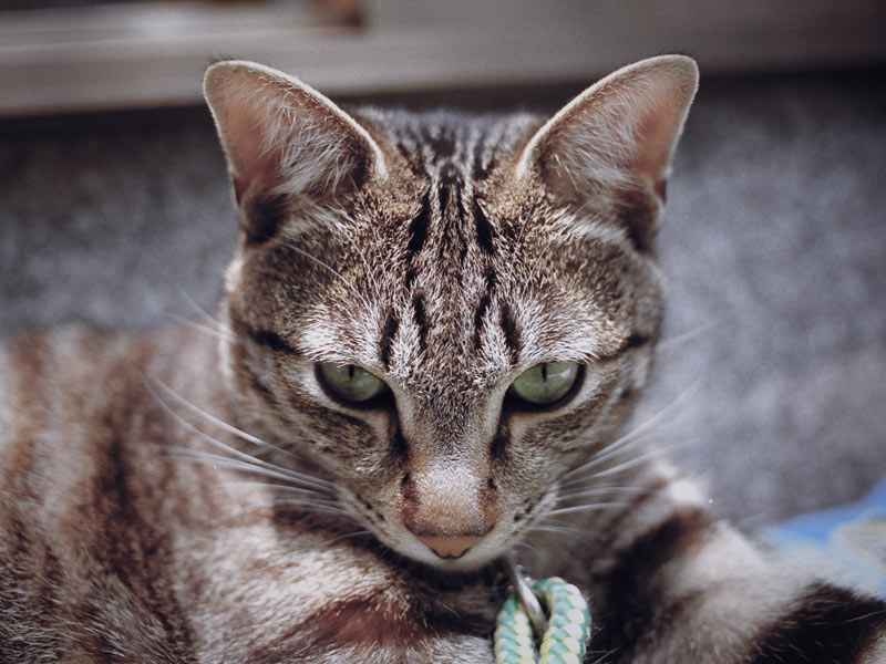 co mówi do nas kot
